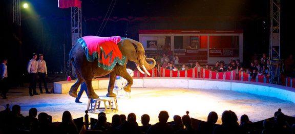 España todavía permite utilizar animales en los circos