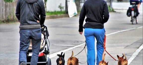 Poner azufre en las calles para los perros es peligroso y está prohibido
